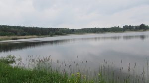Zieringer Teich